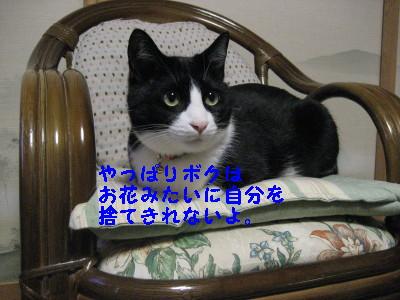 IMG_5867_20090218102350.jpg