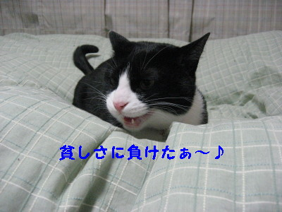 IMG_5956_20090224111837.jpg