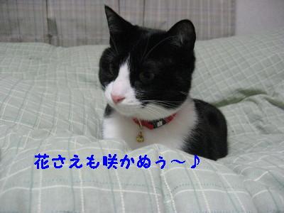 IMG_5974.jpg