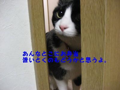 IMG_6003_20090226144214.jpg