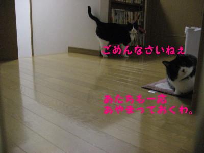 IMG_6004.jpg