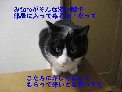 IMG_6038_20090225095541.jpg