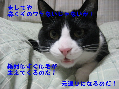 IMG_6157.jpg