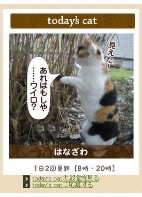 猫パンチTV