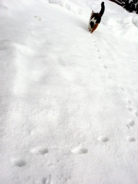 ざわ 深い雪 002