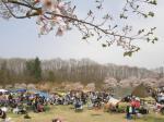 桜とキャンプサイト