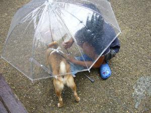 お姉ちゃんと傘に