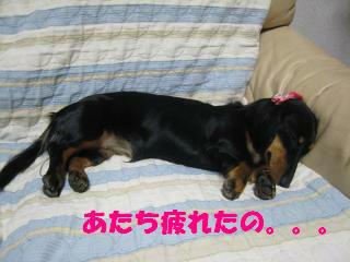 疲れた。。。