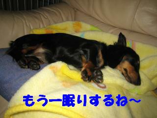 もう一眠り