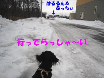 行ってらっしゃ~い!