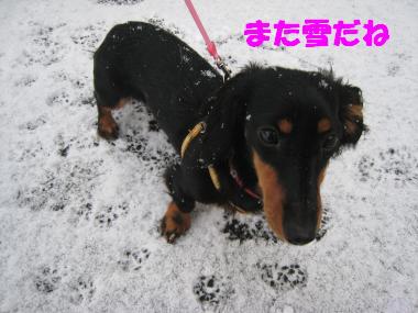 また雪だね~