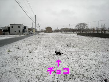 また雪・・・(涙)