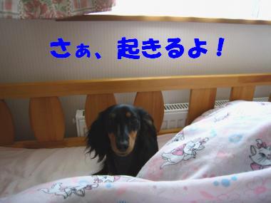 さぁ、起きよう!