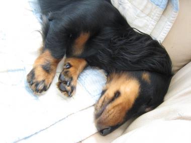 いつものように寝てるよ!