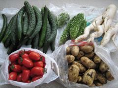 じいちゃんの作った野菜