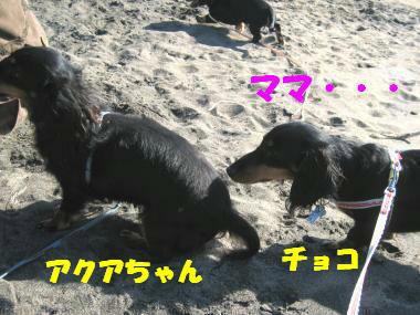 IMG_5263-3.jpg