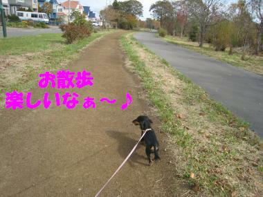 お散歩は楽しいね!