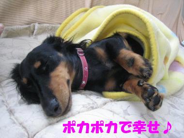 暖かくお昼寝中♪