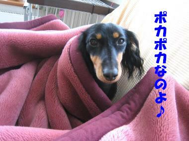 この毛布ポカポカなの♪