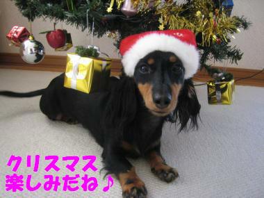 クリスマス楽しみ~!