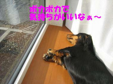 出窓でポカポカお昼寝中