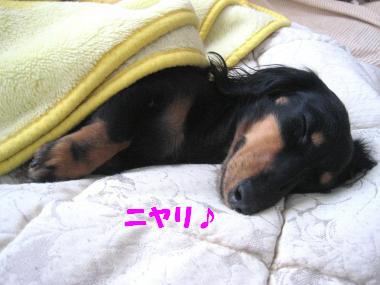 ニヤリ♪(睡眠中)