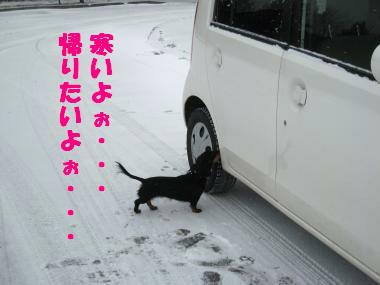 寒くて帰りたいの・・・(涙)