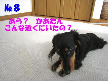 №8 ラスト