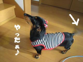 snap_haru128_200811020261.jpg