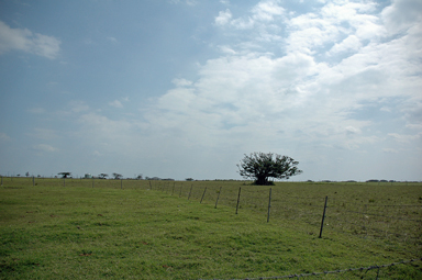 牧場を見渡す