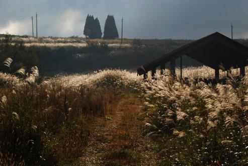 ダナ高原の秋1