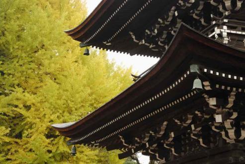 秋の国分寺