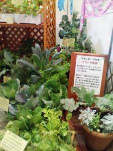 ベランダ菜園のコーナー