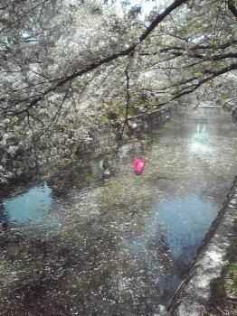 桜まつりのあと