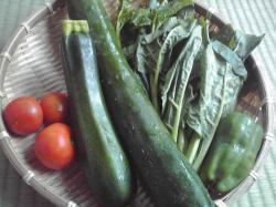 夏野菜だよ