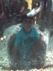 クマノミ水槽