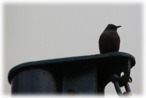 シラサが好きな名前の分からない鳥♪