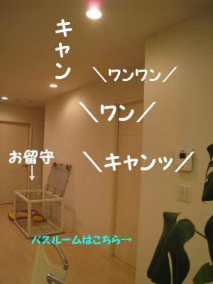 IMG_6526_convert_20081006205237.jpg