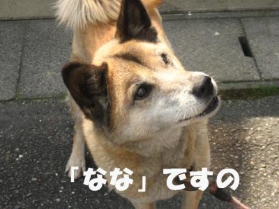 ななちゃん