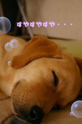 futeki1.jpg
