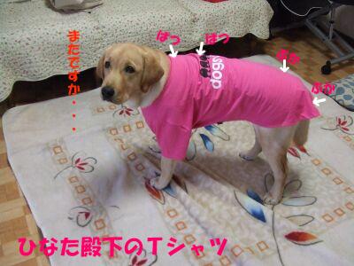 pinkufuku1.jpg