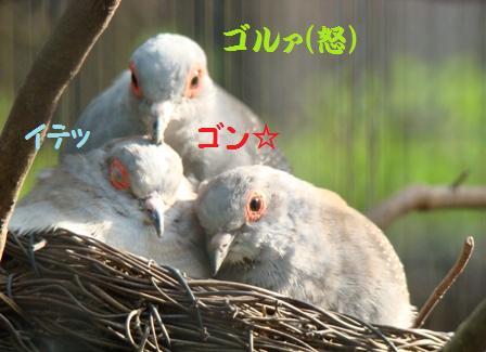 DSC05101_2.jpg