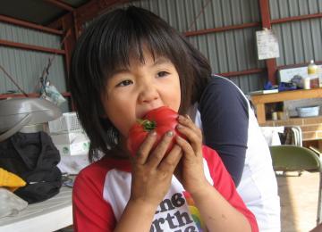 お気に入りトマト2