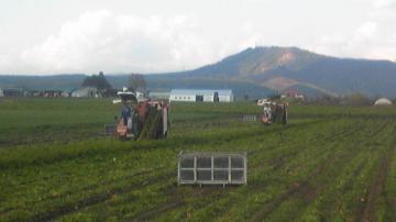 人参収穫10月最終