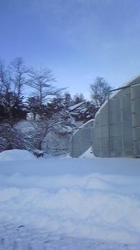 大晦日のハウス除雪