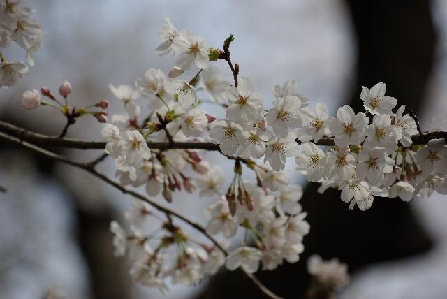枝に花びら