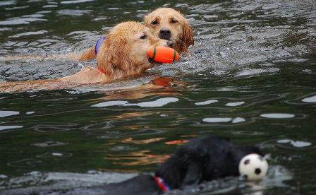 bigdogswim2.jpg