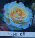 081223waon rose2