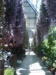 花鳥園23