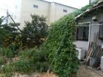 07年夏の庭.JPG